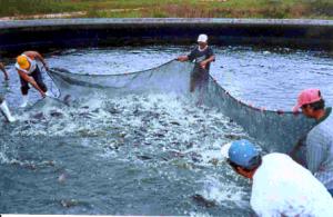 020214 Se formarían anualmente 30 técnicos en acuacultura
