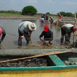 Demanda pesca investigación cientìfica y tecnológica