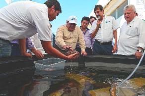 pepino de mar, Campeche