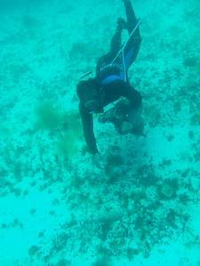 nueva tecnica de medicion del pepino de mar