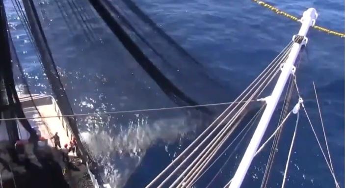 011719 Inicia temporada de atún en el Pacífico